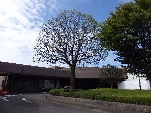 PA034736